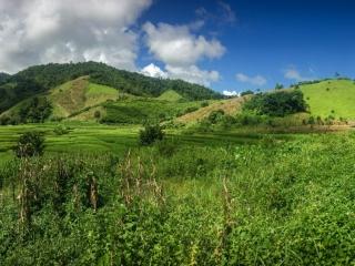 Il est agréable de traverser un si beau paysage pendant notre trek à Chiang Rai