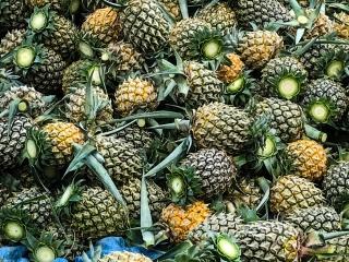 Nous avons croisé de nombreux champs d'ananas dans les montagnes de Chiang Rai