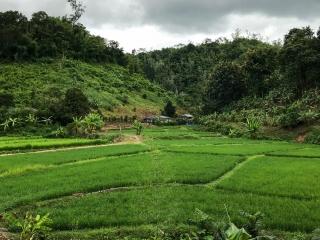 Paysage lors de notre premier jour de trek dans les montagnes de Chiang Rai