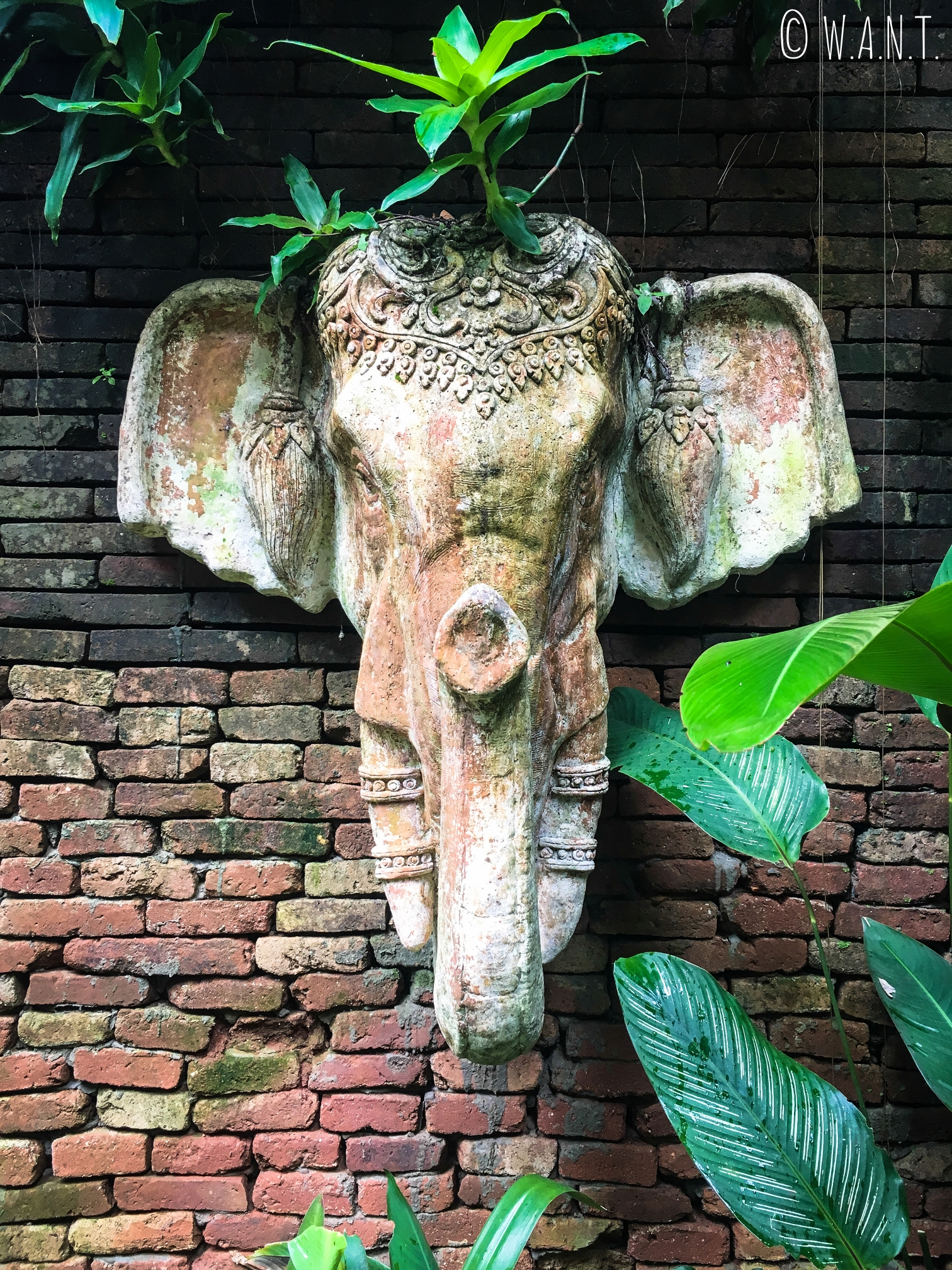 Sculpture de tête d'éléphant au Wat Pha Lad de Chiang Mai