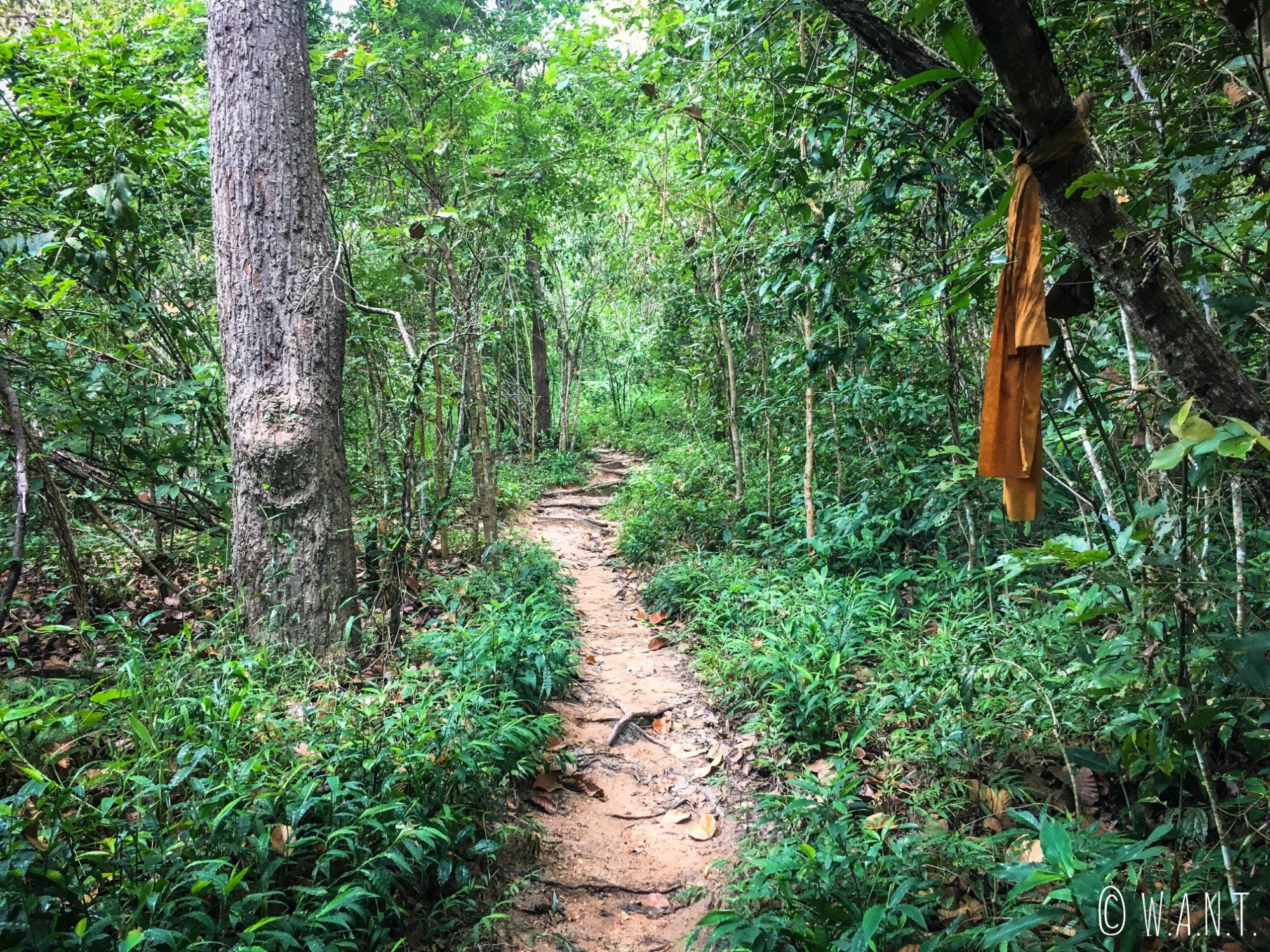 Sur le chemin du Pilgrim trail de Chiang Mai