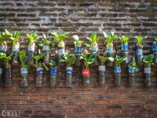 Système de plantation ingénieux dans les rues de Yogyakarta