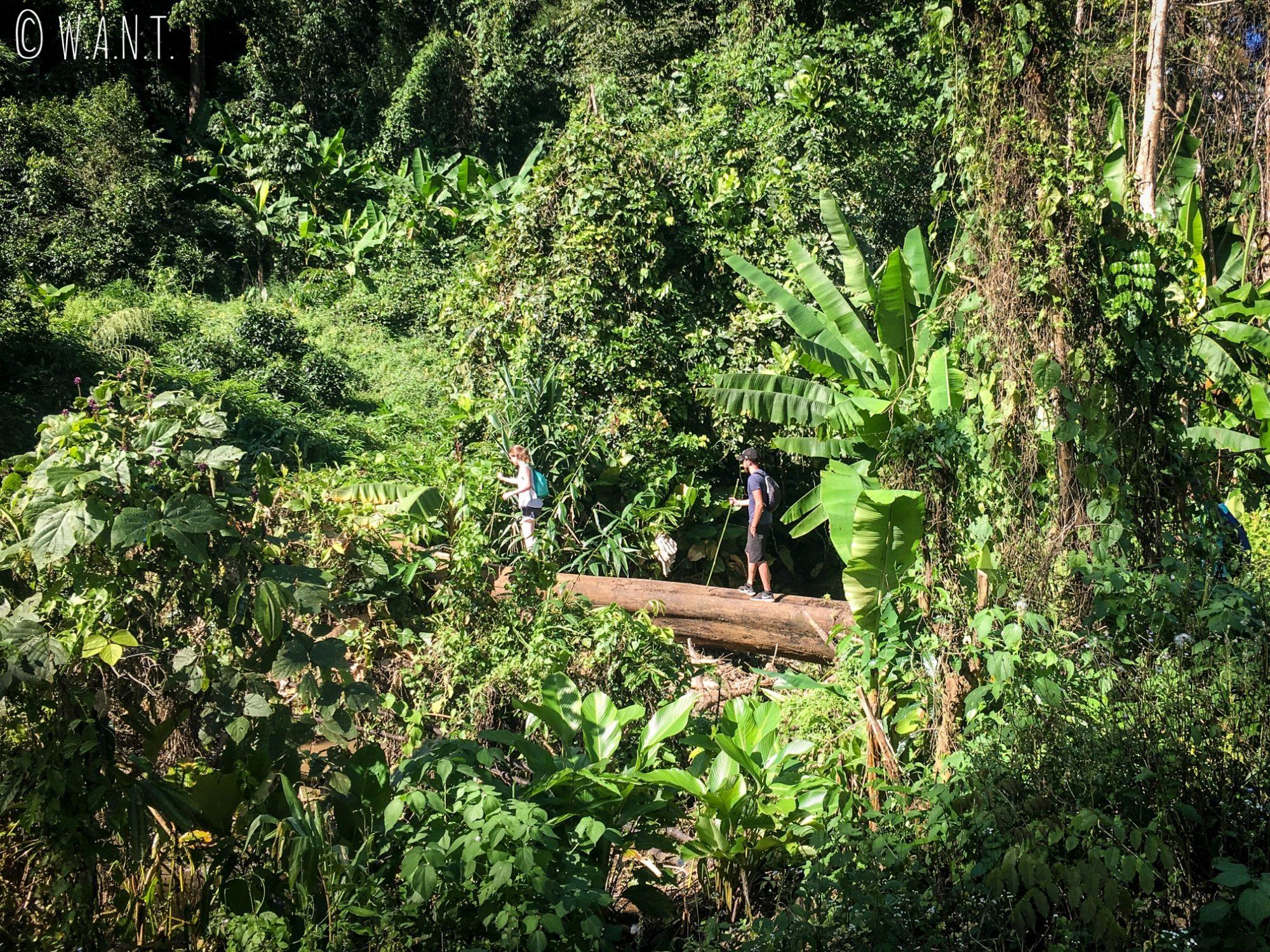 Traversée sur un tronc de bois pendant notre trek à Chiang Rai