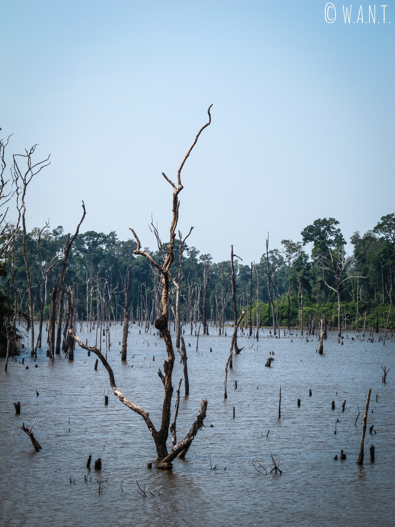 Arbre à la forme étrange dans le réservoir de la rivière Nam Theun