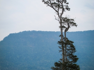 Arbre biscornu dans le paysage de pics karstiques de la boucle de Thakhek