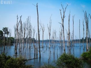 Arbres morts du réservoir de la rivière Nam Theun