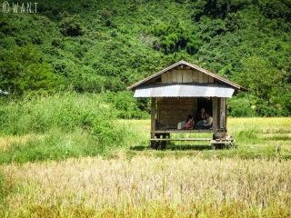 Cabane dans les rizières de Muang Ngoi