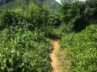 Chemin menant au point de vue Ban Sop Houn de Nong Khiaw