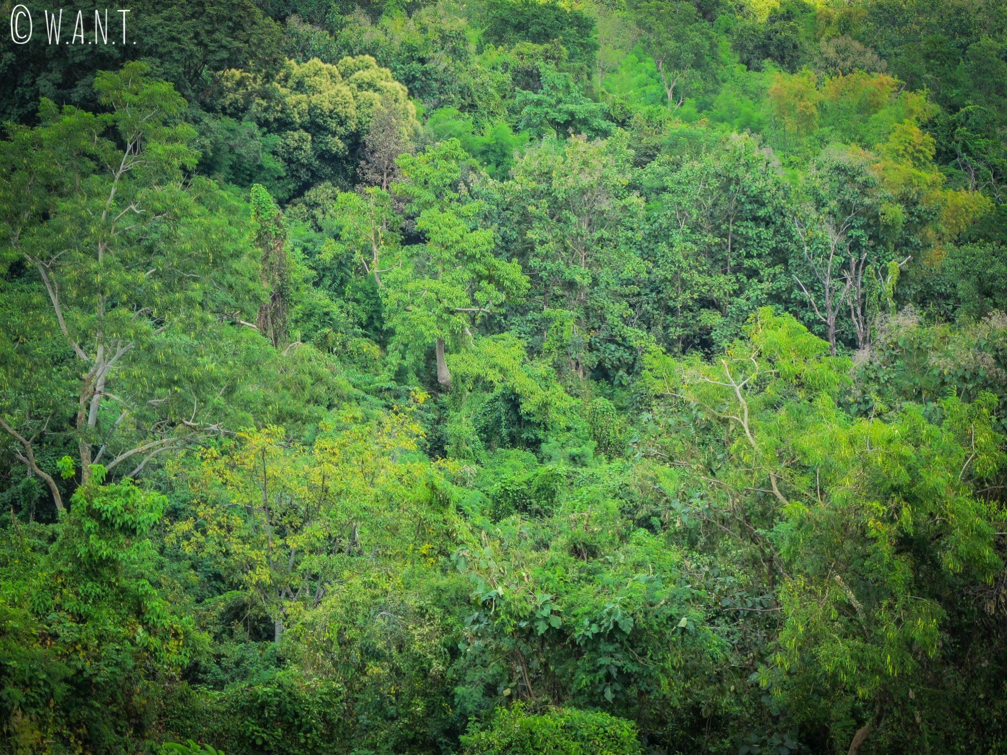 Le site de Vat Phou est entouré par la végétation