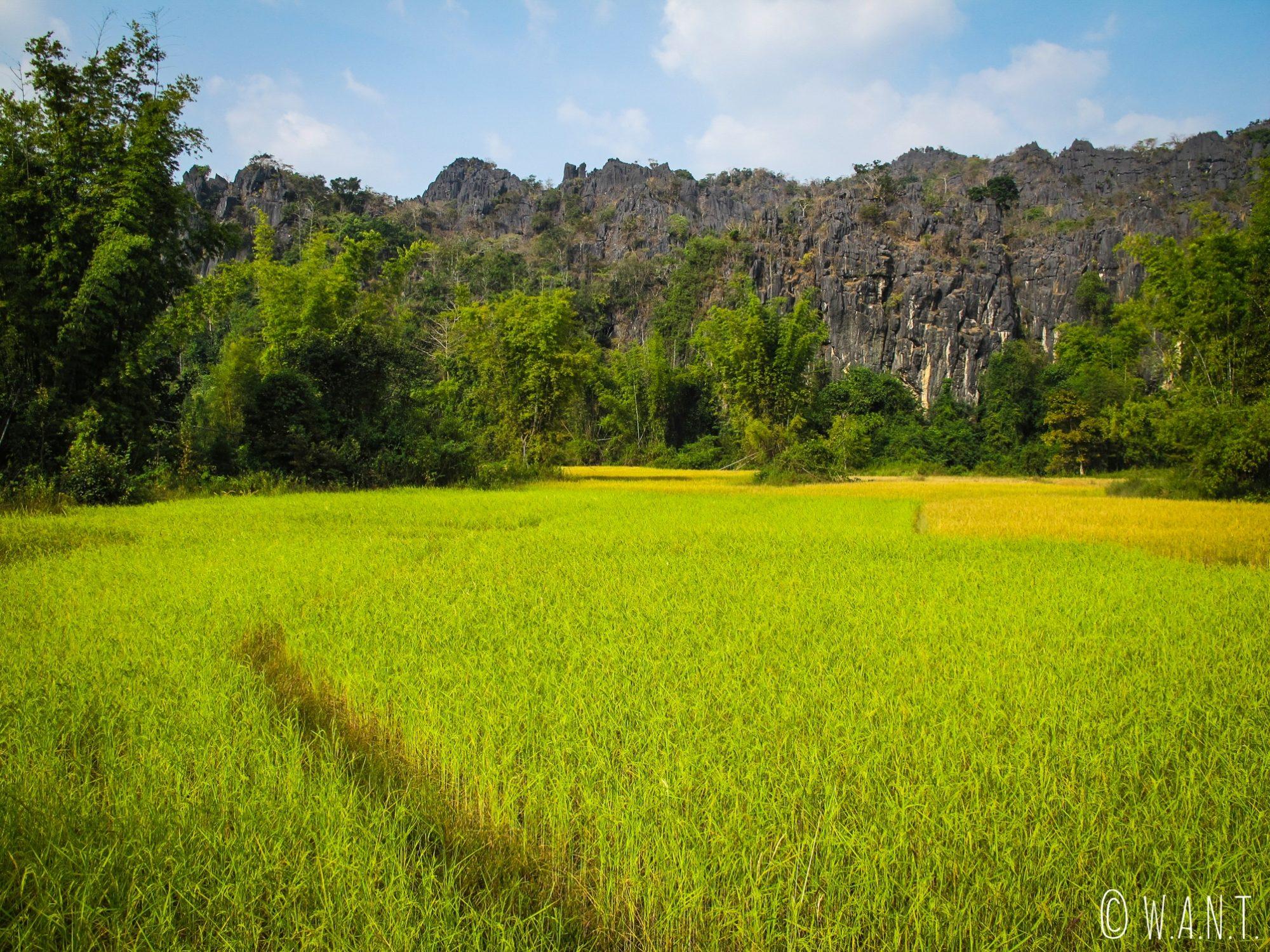 Les rizières et les pics karstiques entourent la route menant jusqu'à Konglor