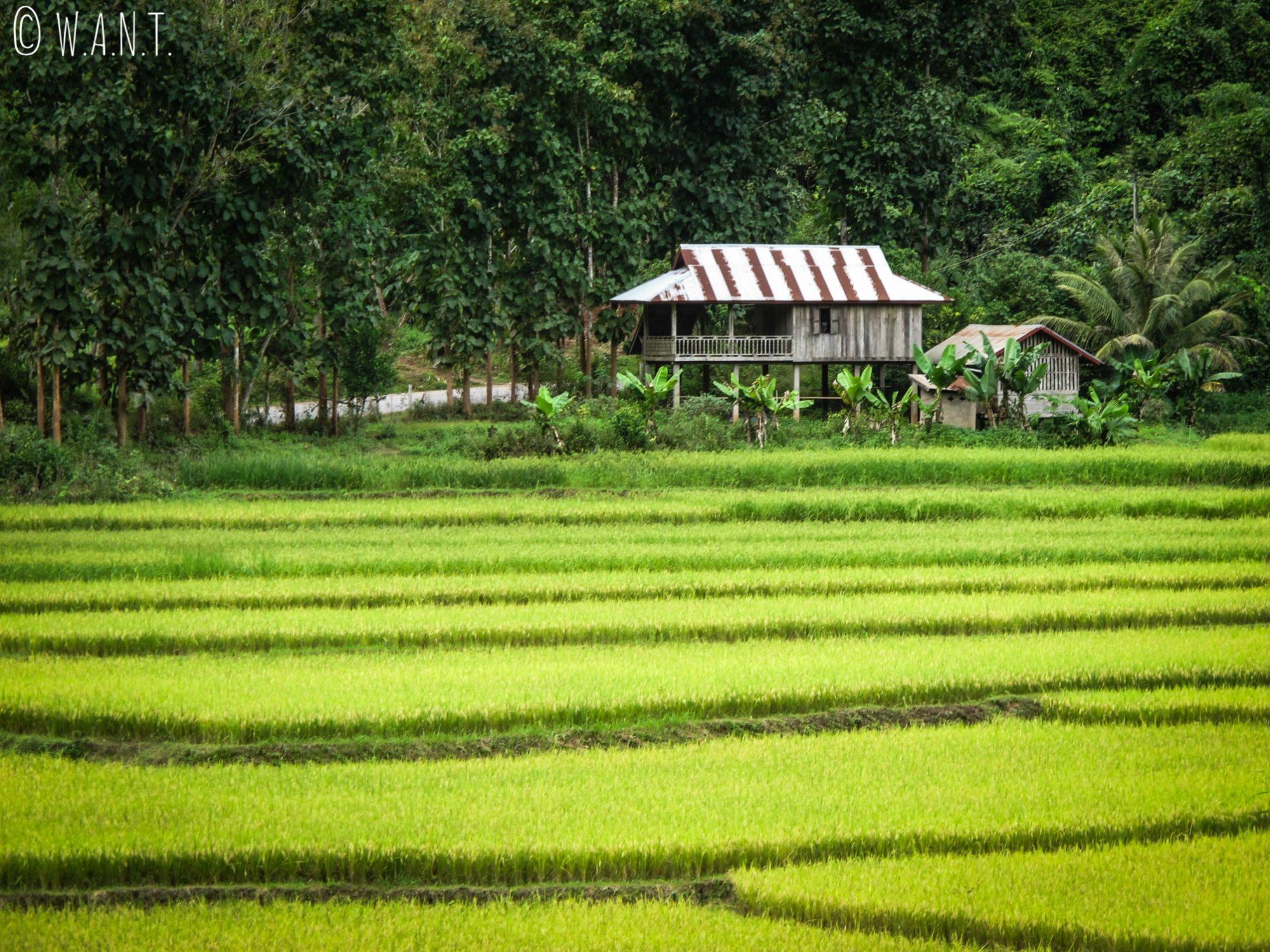 Maison sur pilotis au milieu des rizières près de Luang Namtha