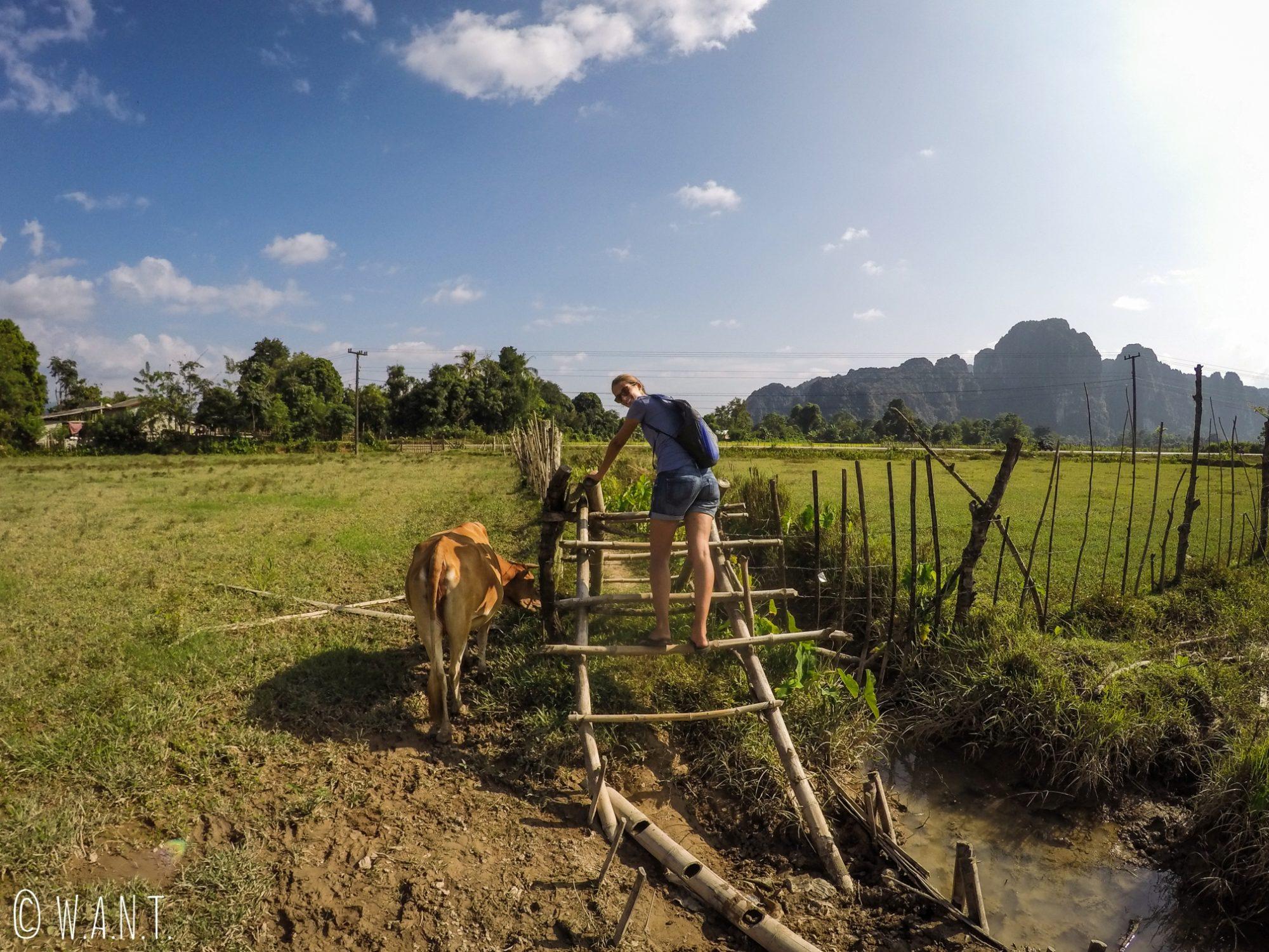 Marion en train de traverser une échelle dans un champ de Vang Vieng
