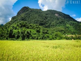 Pic karstique au milieu des rizières de Muang Ngoi