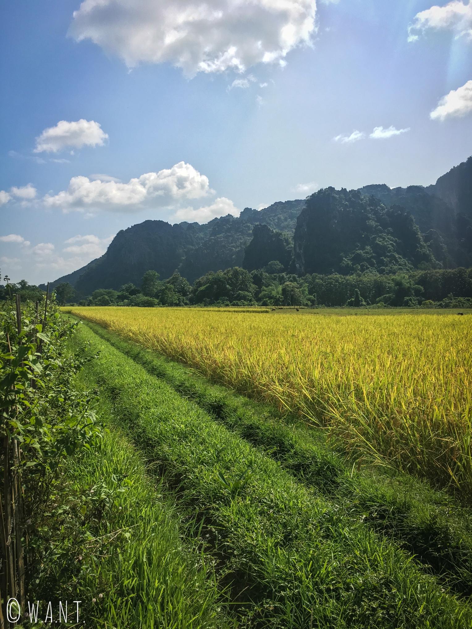 Pics karstiques et rizières autour de Vang Vieng