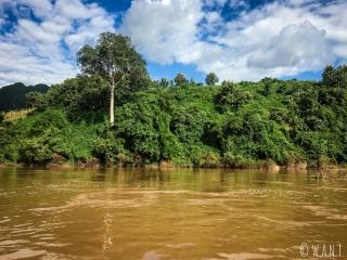 Rive du bord de la Nam Ou entre Nong Khiaw et Muang Ngoi