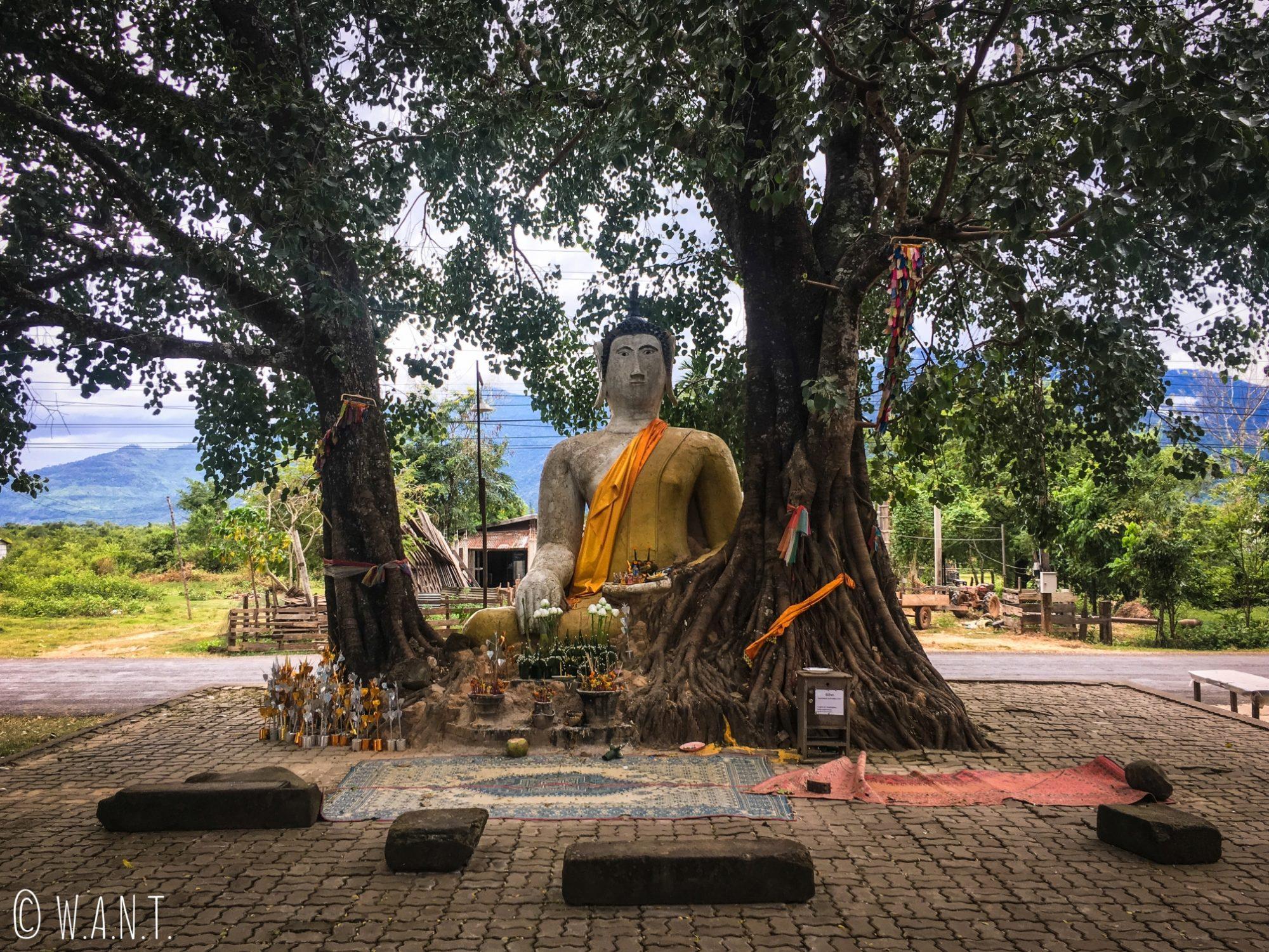 Statue de Bouddha au creux d'un arbre sur la route du Vat Phou