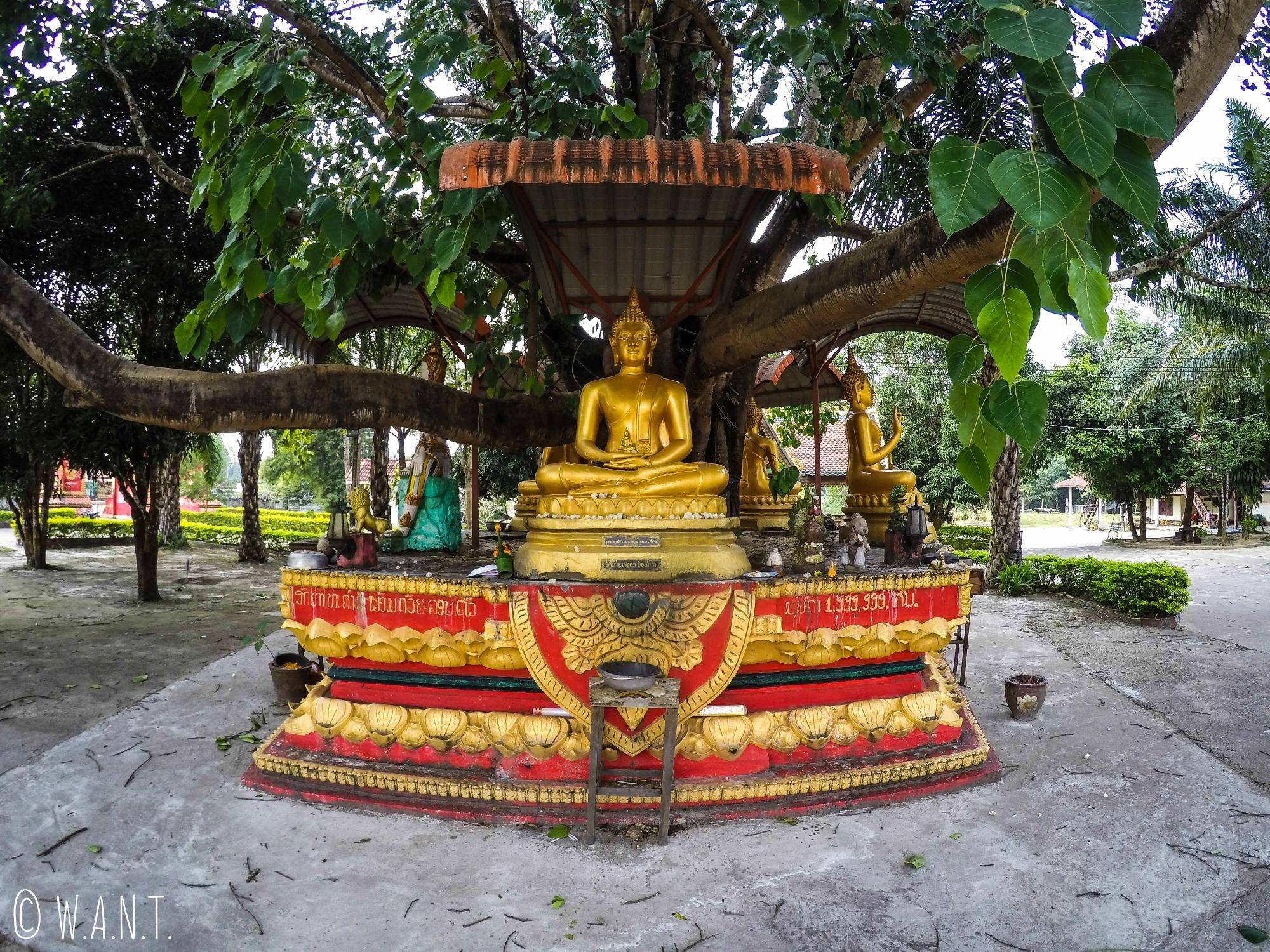 Statues de Bouddha au temple de Lak Sao