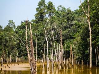 Troncs d'arbres morts au cœur du réservoir de la rivière Nam Theun
