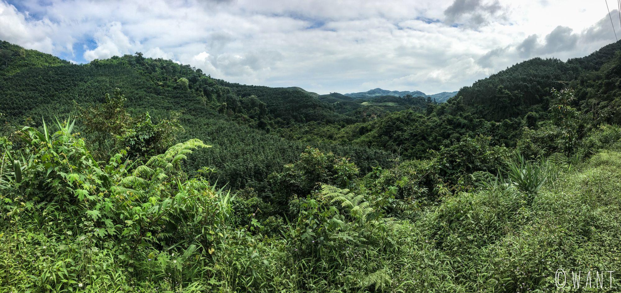 Végétation du parc national Nam Ha au Laos