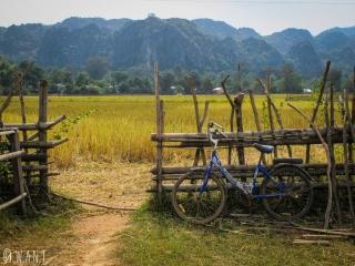 Vélo en bord de champs dans le village de Konglor