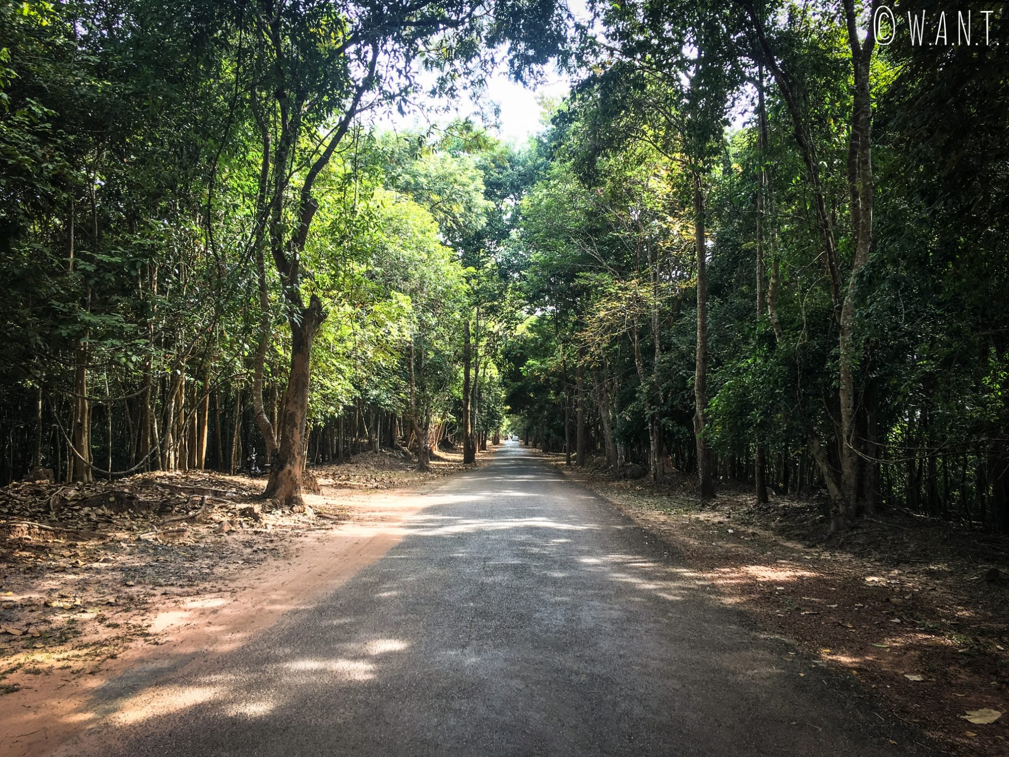 Allée boisée du site archéologique d'Angkor