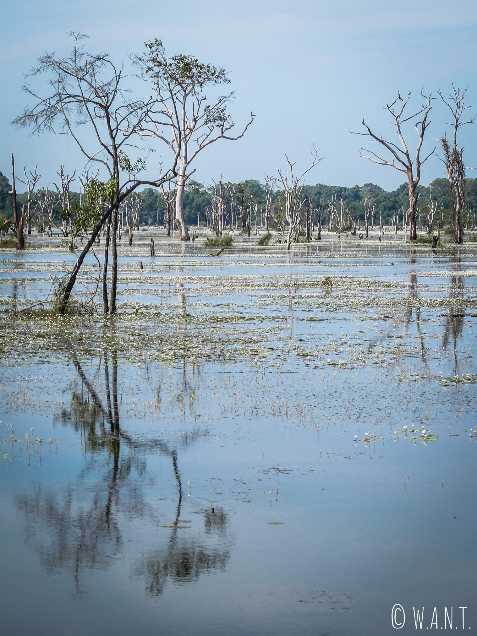 Arbre se reflétant dans l'eau sur le chemin du temple Neak Pean à Angkor