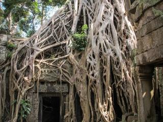 Célèbre porte du temple Ta Phrom à Angkor