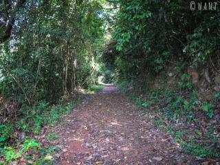 Chemin principal du Parc National de Kep