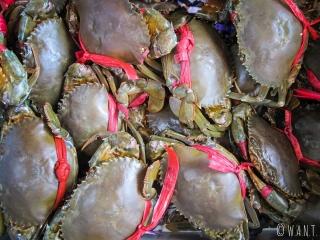 Crabes vivants sur le marché aux crabes de Kep