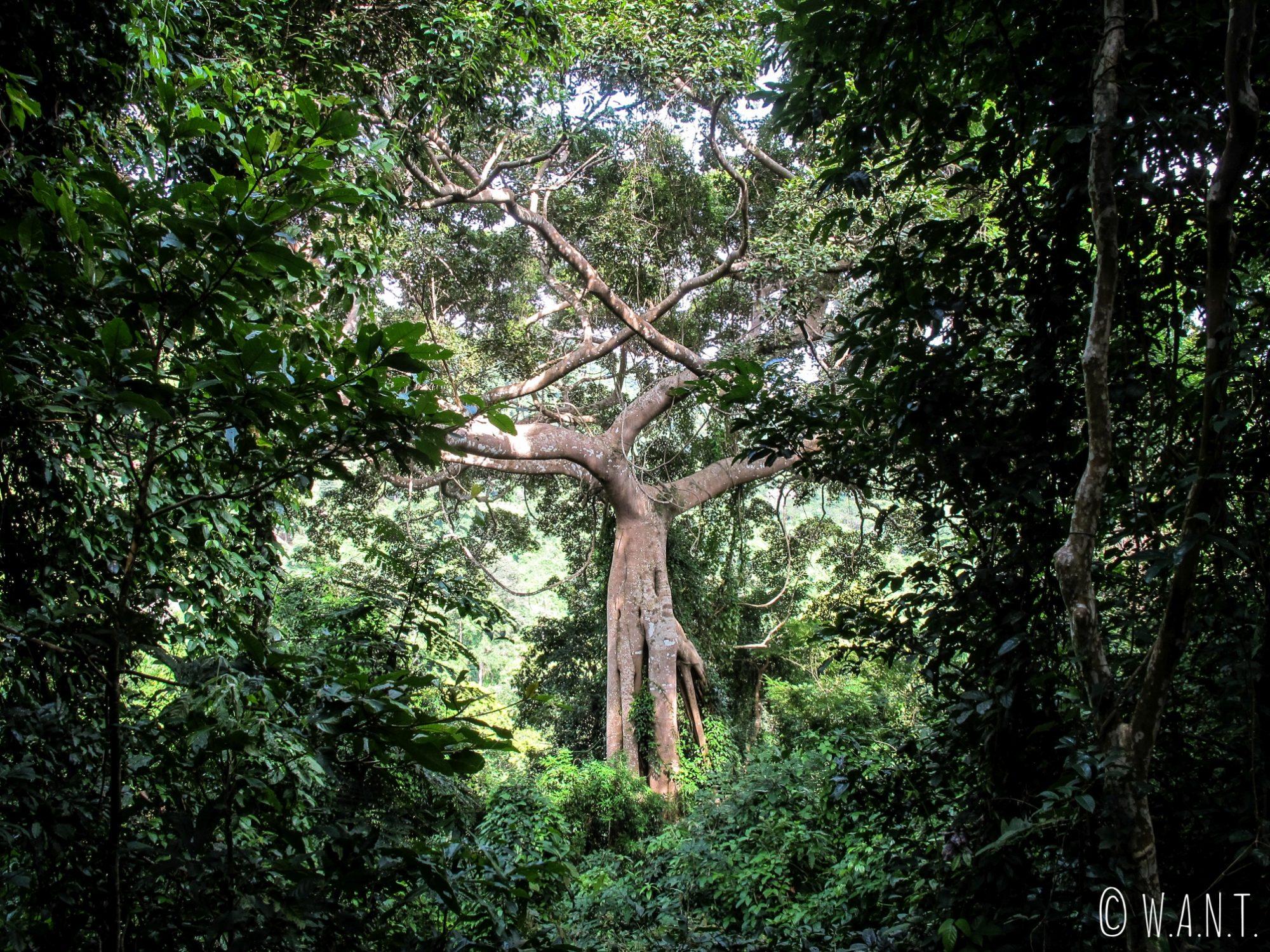 Gros plan sur un arbre du Parc National de Kep
