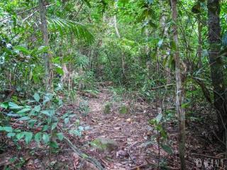 Il faut traverser la jungle pour rejoindre Clear Water Bay sur l'île de Koh Rong Sanloem