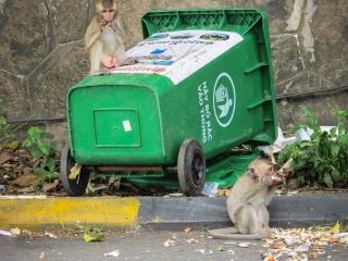 Les singes sauvages renversent les poubelles et leurs déchets dans la rue à Kep