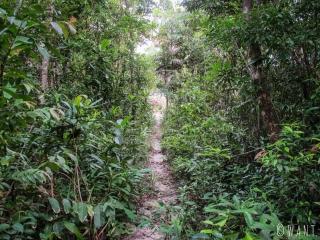 Passage dans la jungle pour rejoindre Clear Water Bay sur Koh Rong Sanloem