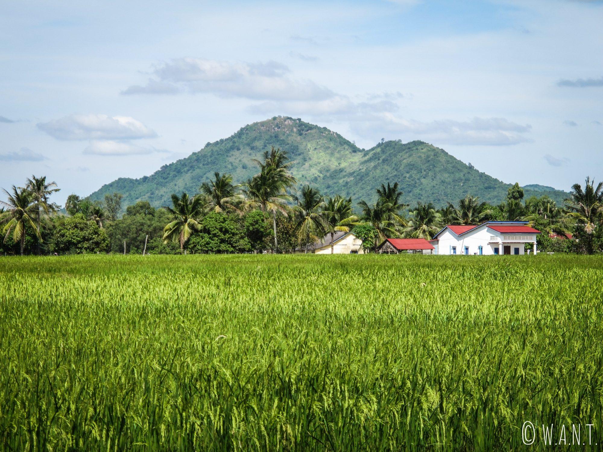 Paysage de rizières le long du chemin menant au Secret Lake de Kampot