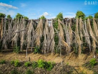 Pieds de poivre de Kampot