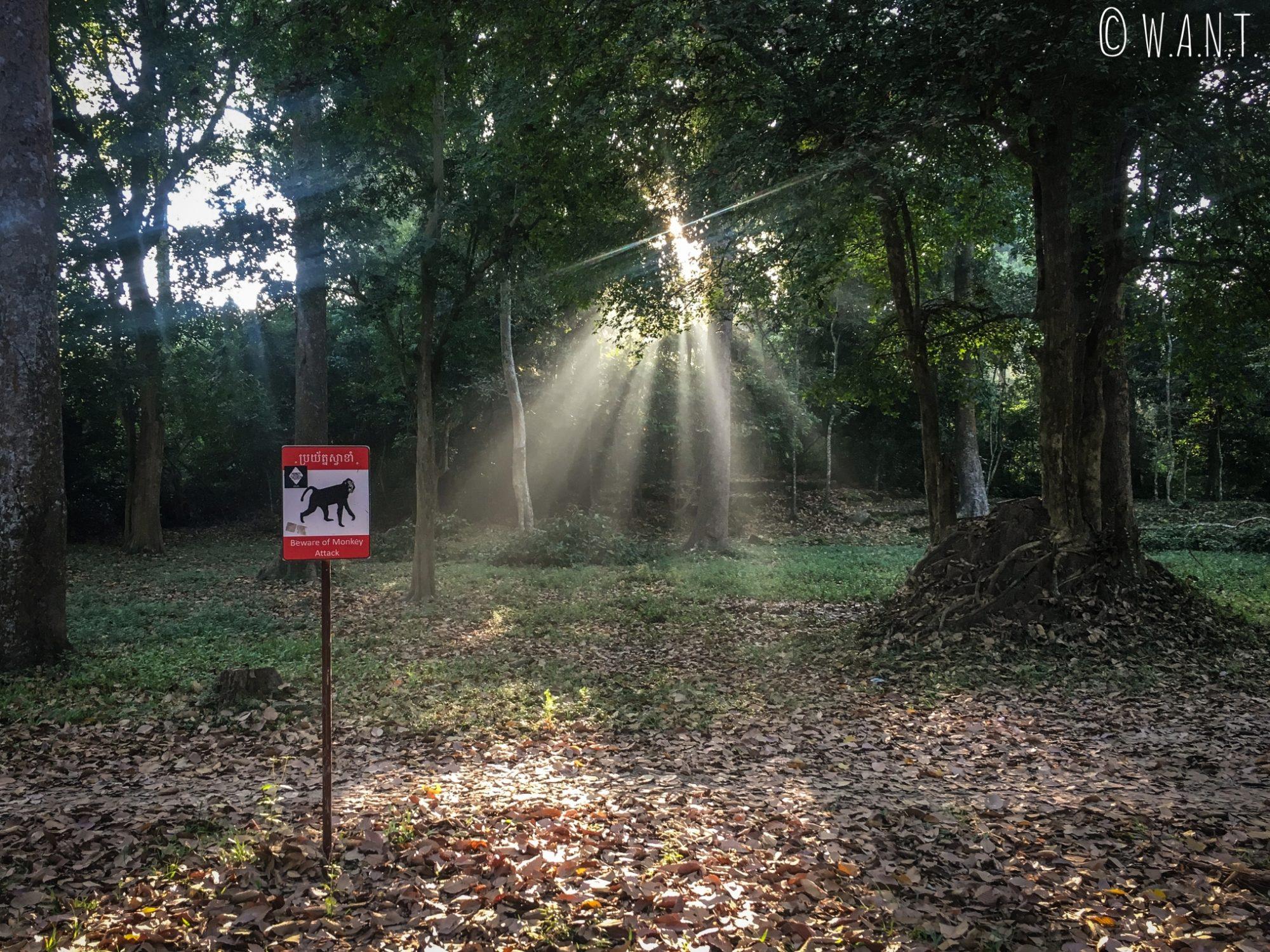Quelques singes ont élu domicile entre Angkor Wat et Angkor Thom