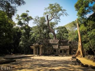 Temple Ta Phrom sur le site archéologique d'Angkor