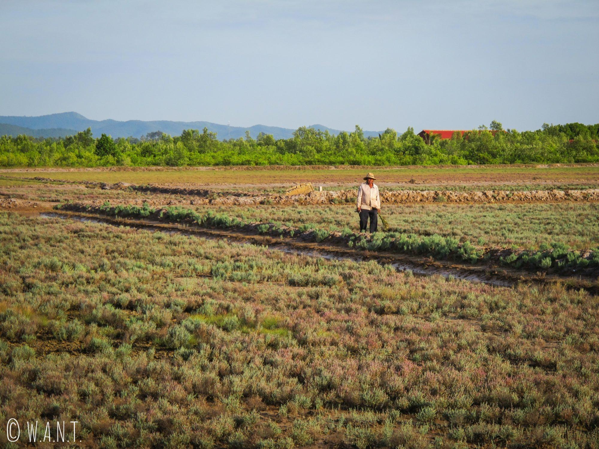 Travailleurs dans les marais salants de Kampot