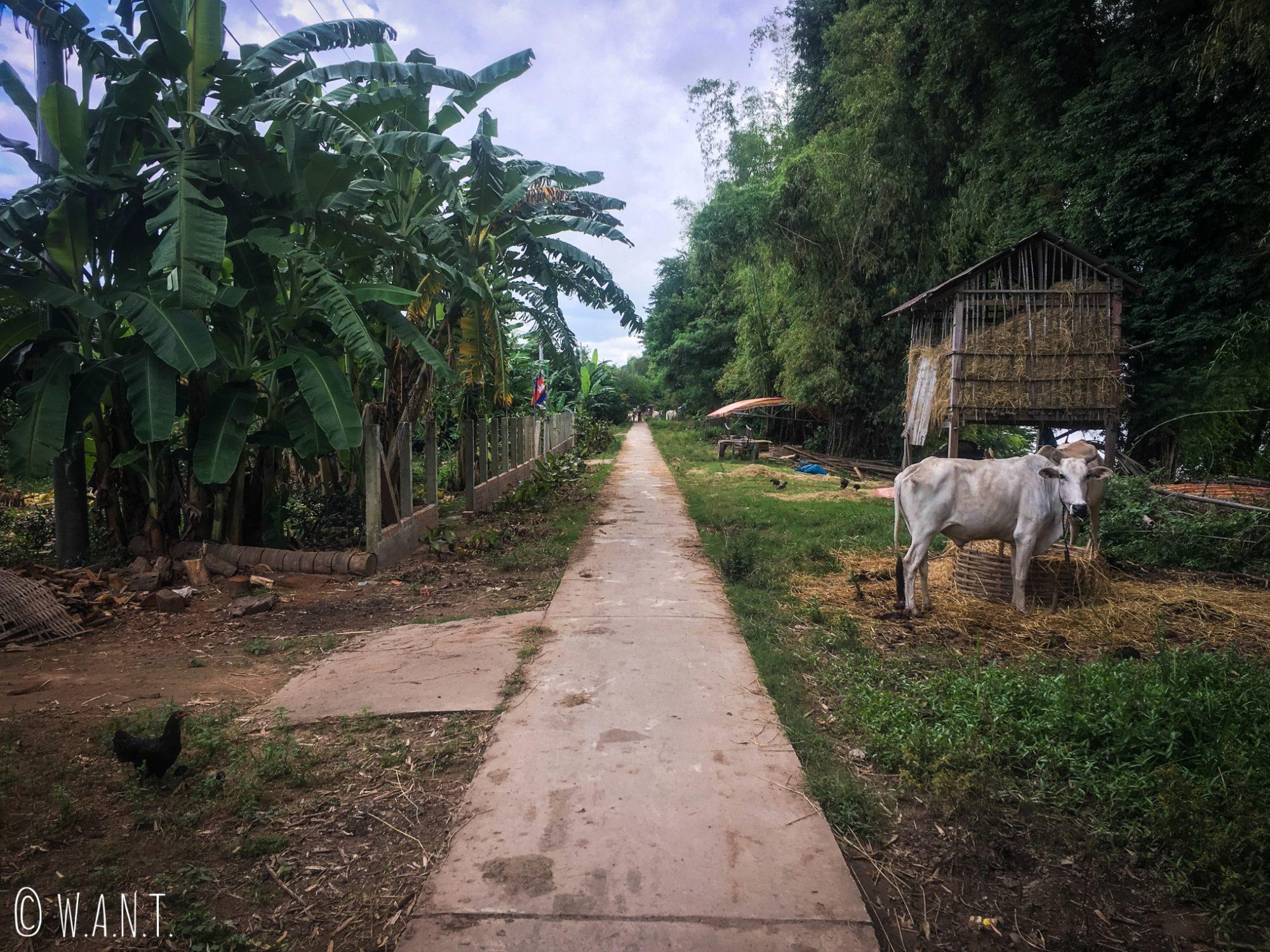 Unique route faisant le tour de l'île de Koh Trong