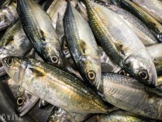 Gros plan sur un étal de poissons au village musulman de Koh Samui