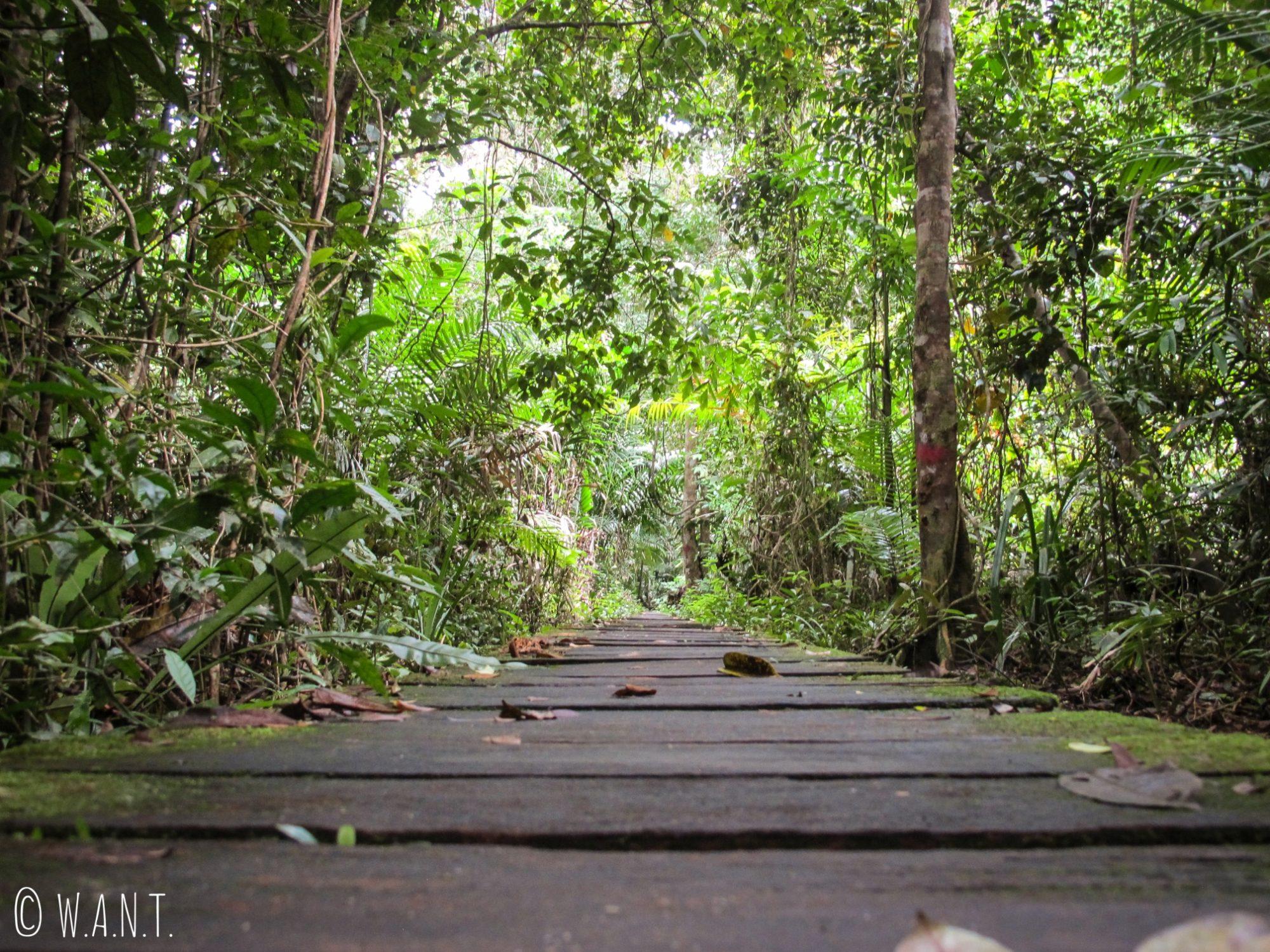 Allée à travers la forêt, menant au trail numéro 4 Ulu Assam du Bako National Park