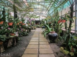 Allée de la serre de l'Orchid Garden de Kuching