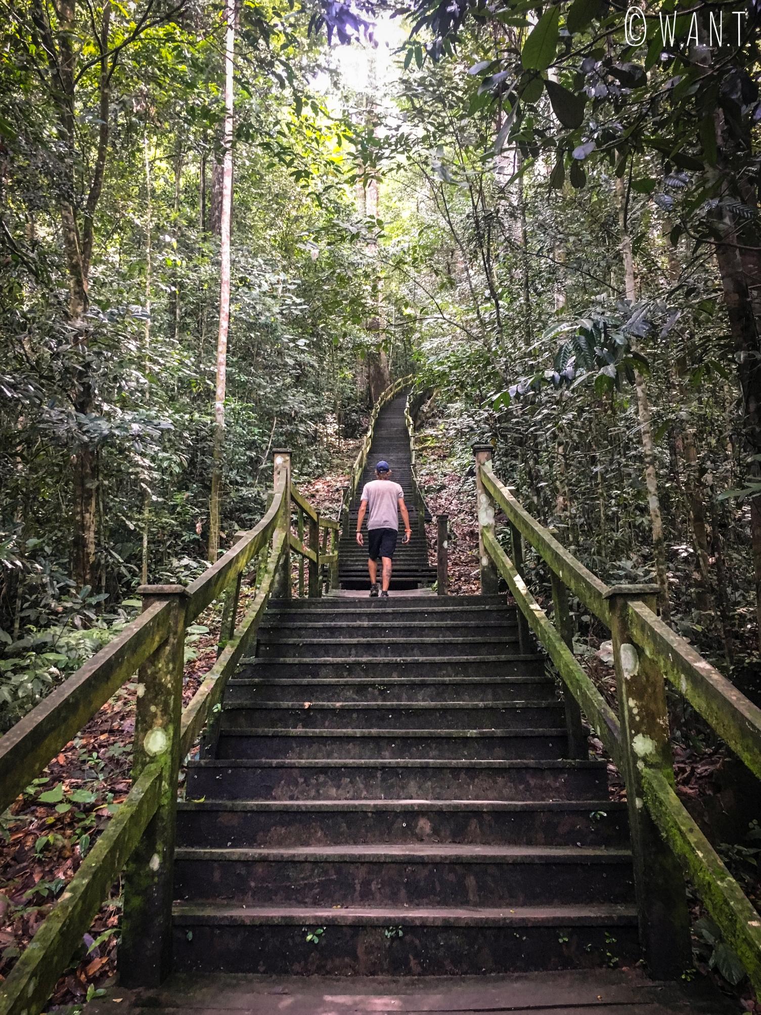 Benjamin dans les escaliers menant à la canopée au Parc national Ulu Temburong au Brunei