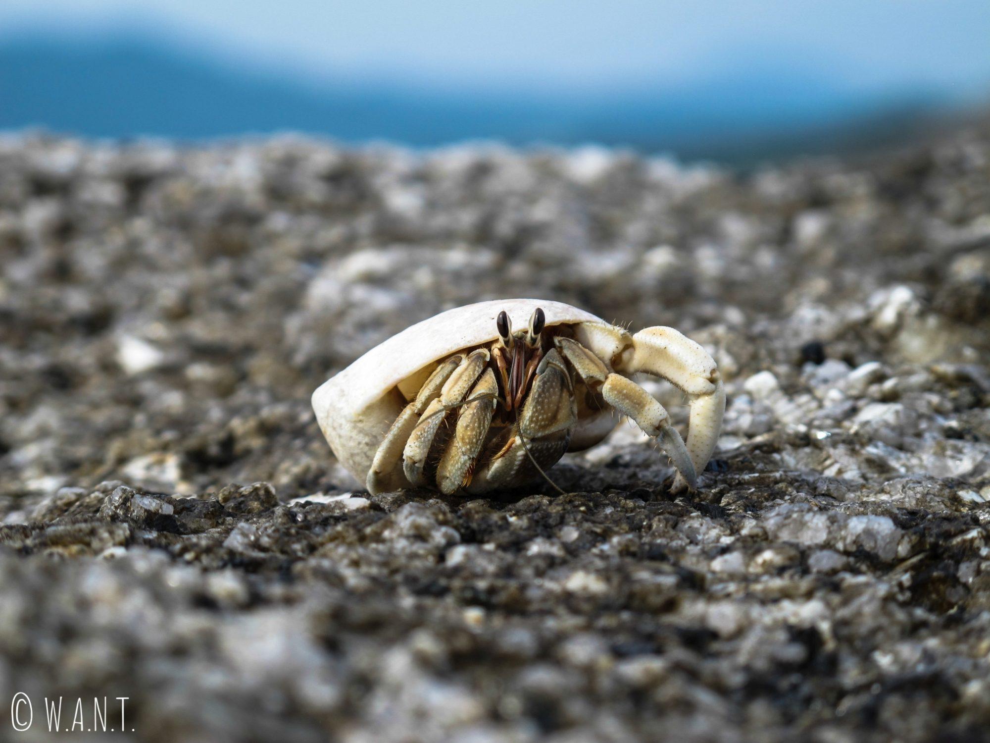 Bernard l'hermite sur Bon Island près de Phuket