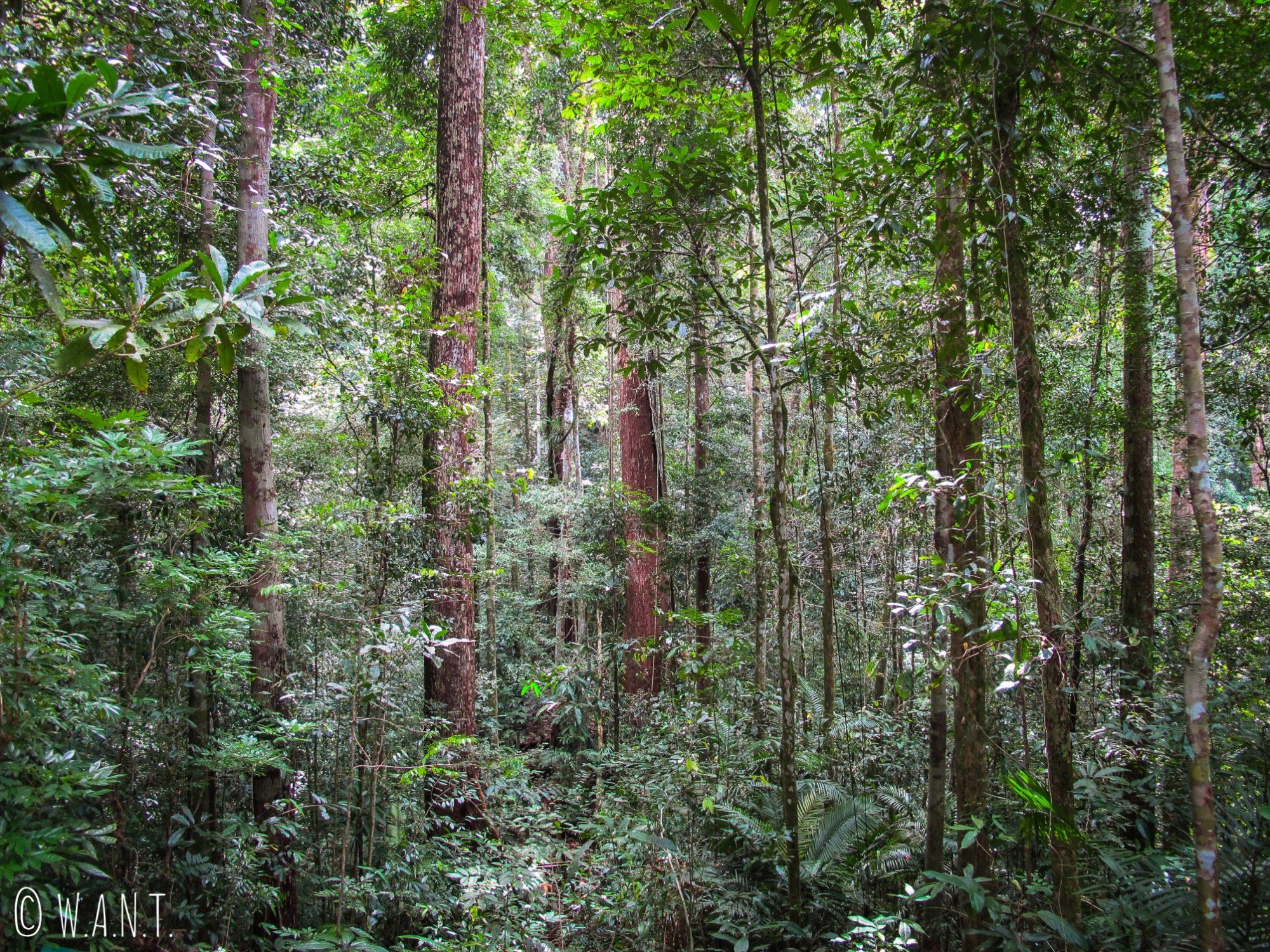 Forêt du Parc national Ulu Temburong au Brunei