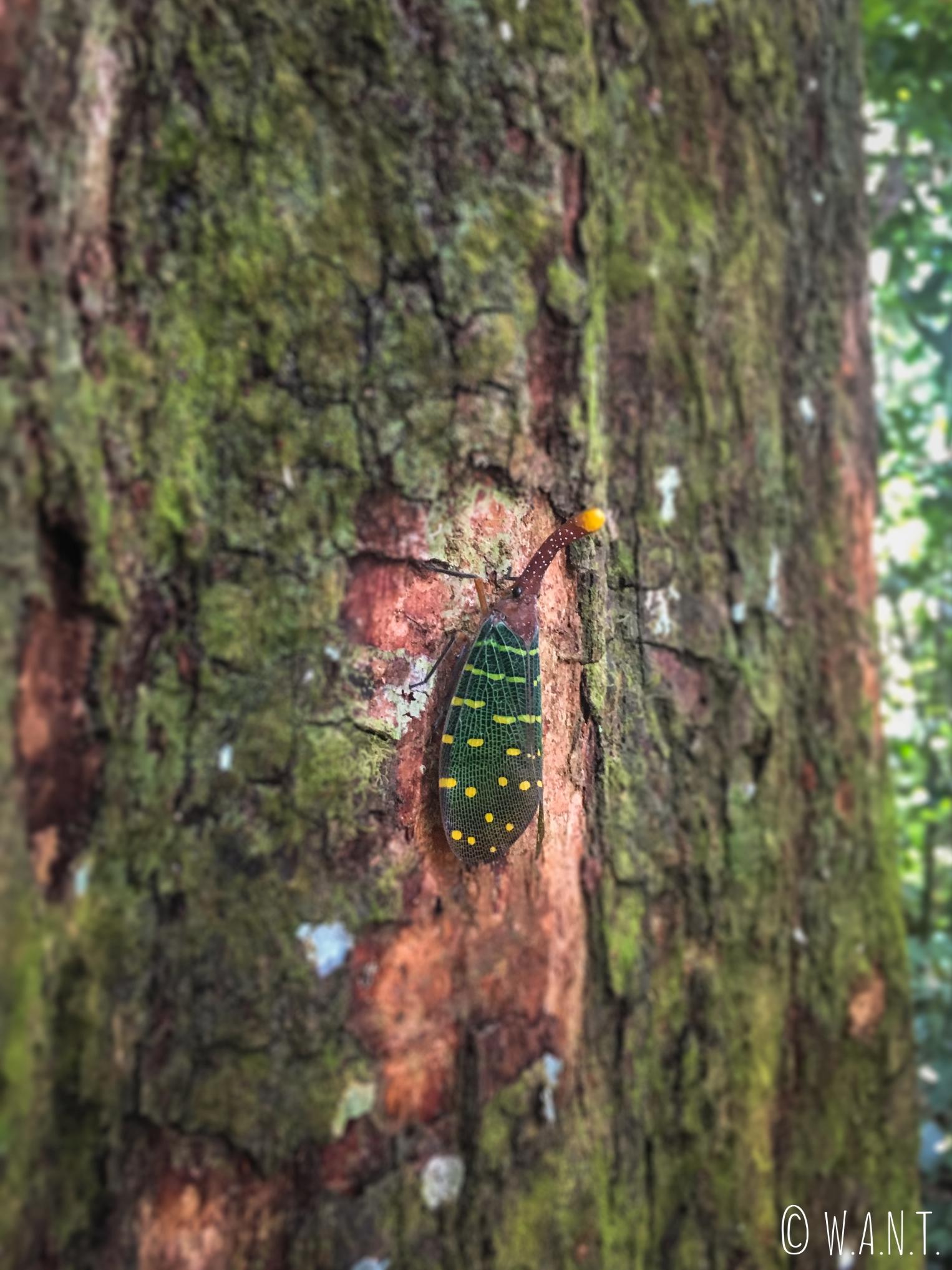 Insecte dans le Parc national Ulu Temburong au Brunei