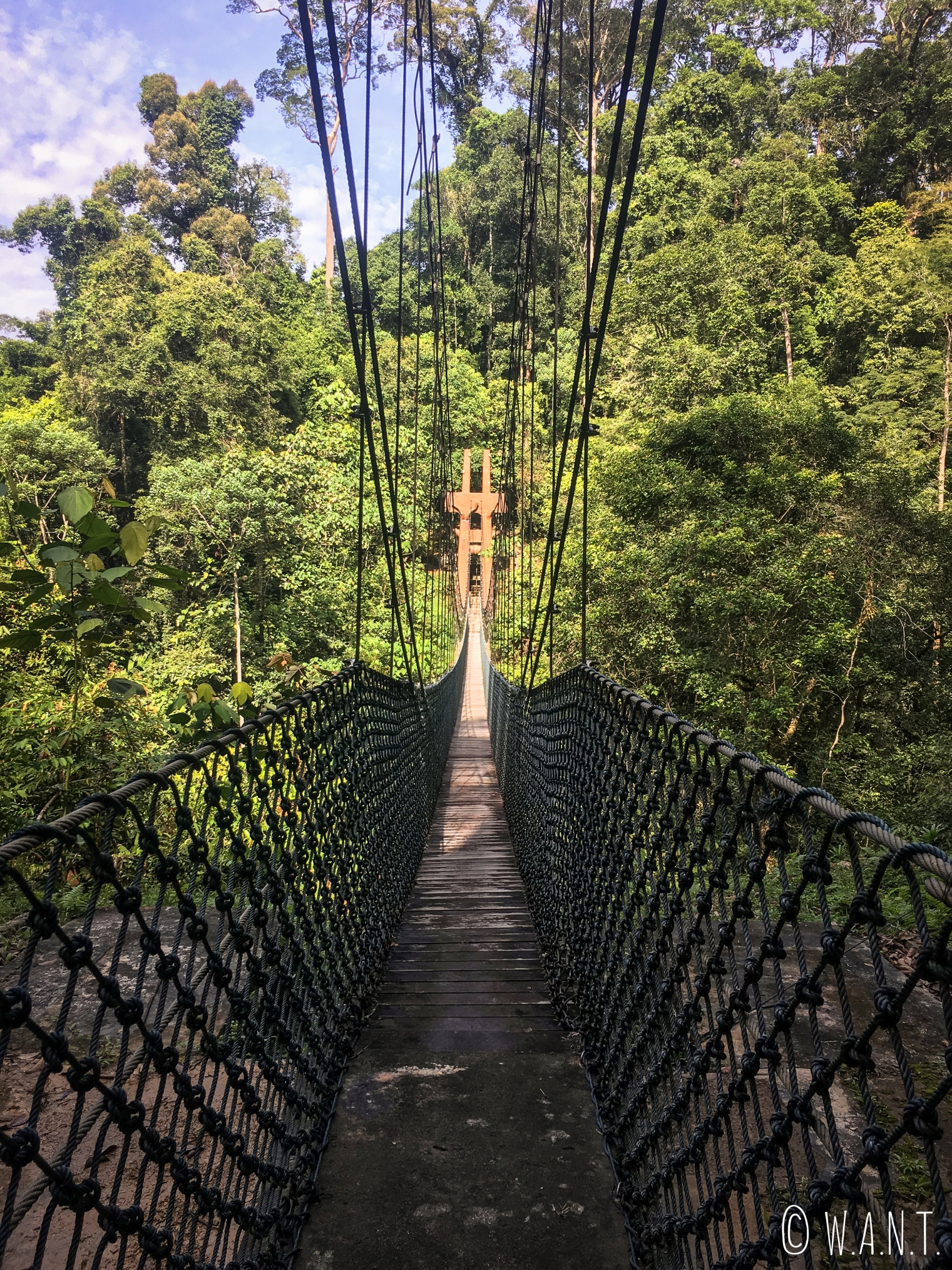 L'un des ponts suspendus au Parc national Ulu Temburong au Brunei