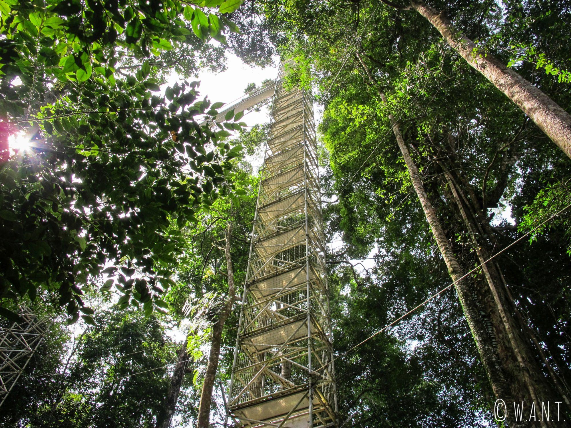L'une des tours métalliques menant à la canopée du Parc national Ulu Temburong au Brunei
