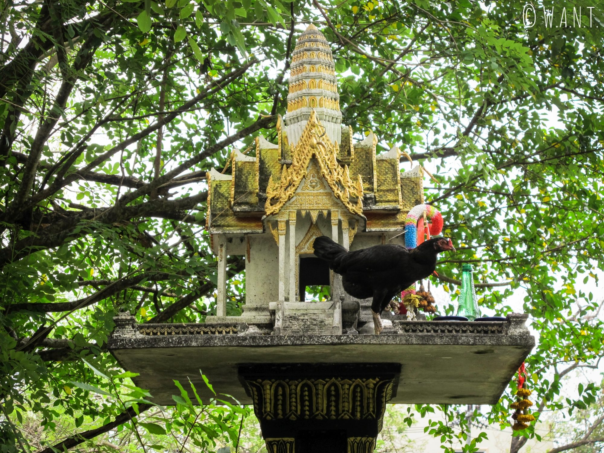 Maison aux esprits et poule dans le vieux Phuket