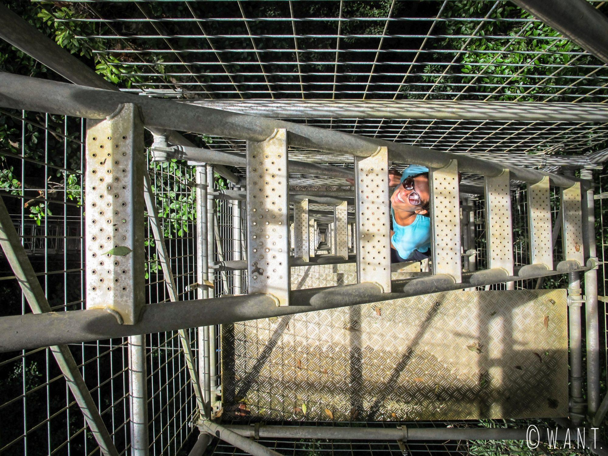 Marion dans les escaliers menant à la canopée du Parc national Ulu Temburong au Brunei